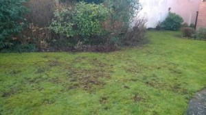 A particularly unhappy lawn.
